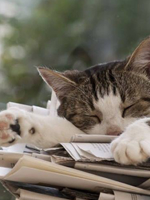 _-Cat-relaxed1