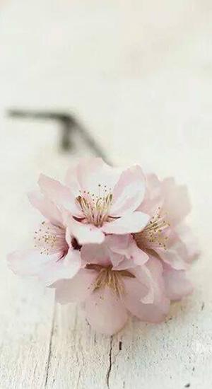 simple-flower